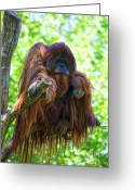 Ape. Great Ape Greeting Cards - Whats up Greeting Card by Heiko Koehrer-Wagner