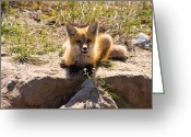 Wildlife Pyrography Greeting Cards - Whats ya doing Greeting Card by Darren Langlois