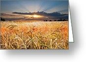 Farming  Greeting Cards - Wheat At Sunset Greeting Card by Meirion Matthias