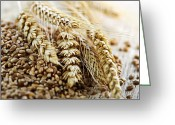 Ears Greeting Cards - Wheat ears and grain Greeting Card by Elena Elisseeva