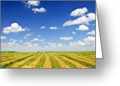 Bales Greeting Cards - Wheat farm field at harvest Greeting Card by Elena Elisseeva