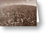 Wheatfields Photo Greeting Cards - Wheat Fields Forever Greeting Card by Steven Huszar