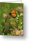 Swamp Milkweed Greeting Cards - When I Grow Up Greeting Card by Peg Urban