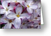 Stippling Greeting Cards - When Lilacs Last in the Dooryard Bloomd Greeting Card by Janeen Wassink Searles