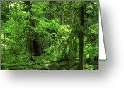 Foilage Greeting Cards - Where the forest people live Greeting Card by Teri Schuster