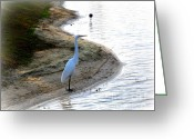 Landscape Greeting Cards - Where The Herons Meet Greeting Card by Susanne Van Hulst