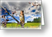 Wildlife Photo Greeting Cards - Where The Waxwings Used To Dwell Greeting Card by Bob Orsillo