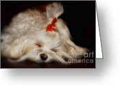 Sleeping Dog Greeting Cards - While Sugarplums Danced Greeting Card by Lois Bryan