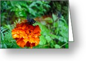 Designer Butterfly Works Photo Greeting Cards - Whirl Wings Butterfly Greeting Card by Debra     Vatalaro