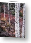 Woods Pastels Greeting Cards - Whispering Aspen Greeting Card by Debbie Harding