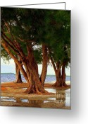Tropical Photographs Greeting Cards - Whispering Trees of Sanibel Greeting Card by Karen Wiles