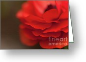 Bold Blossom Greeting Cards - Whispers of Love Greeting Card by Reflective Moments  Photography and Digital Art Images