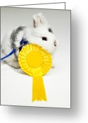 Award Greeting Cards - White And Black Rabbit On Blue Leash With Yellow Rosette Greeting Card by Michael Blann