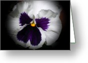 Loved Ones. Greeting Cards - White and Purple Pansy Greeting Card by Sholeh Mesbah