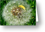 Dandelion Pyrography Greeting Cards - White ball Greeting Card by Sorin Fota