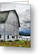 White Barns Greeting Cards - White Barn Greeting Card by Emily Stauring