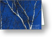 Bare Trees Greeting Cards - White Birch Blue Sky Greeting Card by Smilin Eyes  Treasures
