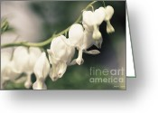 Flower Cards Greeting Cards - White Bleeding Hearts Floral Greeting Card by Jayne Logan