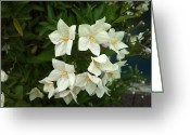 Phuong Tu Greeting Cards - White Bloom Greeting Card by Phuong Tu