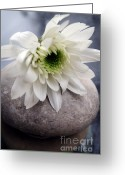 Office Art Greeting Cards - White Blossom On Rocks Greeting Card by Linda Woods