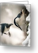 Fun Greeting Cards - White Breasted Nuthatch In The Snow Greeting Card by Bob Orsillo
