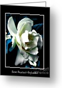 Theaceae Greeting Cards - White Camellia Greeting Card by Rose Santuci-Sofranko