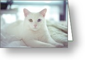 Resting Greeting Cards - White Cat Laying On Comfy Bed Greeting Card by by Dornveek Markkstyrn
