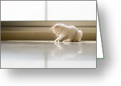 One Small Window Greeting Cards - White Cat Playing On The Floor Greeting Card by Jose Torralba