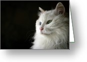 Green Eyes Greeting Cards - White Cat With Dignity Greeting Card by Hiu-Ming Eric Lam & 2To1 Photography
