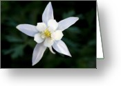 White And Green Greeting Cards - White Columbine Greeting Card by Kelley King