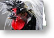 Poultry Photo Greeting Cards - White Crested Black Polish Cockerel Greeting Card by Karon Melillo DeVega