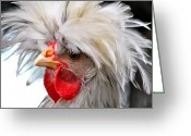 Poultry Photo Greeting Cards - White Crested Blue Polish Cockerel Greeting Card by Karon Melillo DeVega
