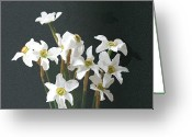 Drawing Pyrography Greeting Cards - White Daffodils Greeting Card by Stefan Petrovici