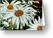 White Daisies Greeting Cards - White Daisies Greeting Card by Methune Hively