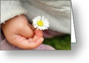 Human Hand Greeting Cards - White Daisy In Baby Hand Greeting Card by © Mameko