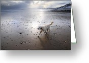 Dog Prints Photo Greeting Cards - White Dog Greeting Card by Svetlana Sewell