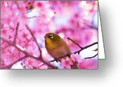 Twig Greeting Cards - White Eye Bird Greeting Card by masahiro Makino