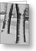 Winter Trees Greeting Cards - White-Face Greeting Card by Odd Jeppesen