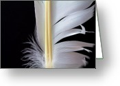 Zen Greeting Cards - White Feather Greeting Card by Bob Orsillo