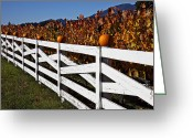 Fence Row Greeting Cards - White fence with pumpkins Greeting Card by Garry Gay