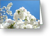Popular Framed Prints Greeting Cards - White Floral Blossoms art prints Spring Tree Blue Sky Greeting Card by Baslee Troutman Fine Art Prints