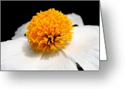 White Wing Greeting Cards - White Flower 2 Greeting Card by Wingsdomain Art and Photography