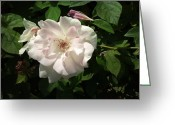 Phuong Tu Greeting Cards - White Flower Greeting Card by Phuong Tu