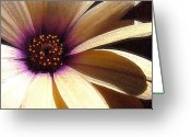 Purples Greeting Cards - White Flower Greeting Card by Ross Powell
