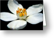 Victoria Wise Greeting Cards - White Flower Greeting Card by Victoria Wise