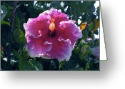 Kevin W .smith Greeting Cards - White-Frilled Red Hibiscus Greeting Card by Kevin Smith