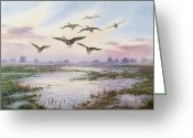 Landing Painting Greeting Cards - White-Fronted Geese Alighting Greeting Card by Carl Donner