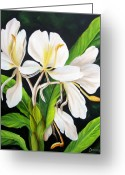 Dominica Alcantara Greeting Cards - White Ginger Greeting Card by Dominica Alcantara