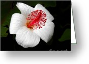 Flower Art Greeting Cards - White Hibiscus Flower Greeting Card by Rebecca Margraf