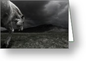 Running Horse Greeting Cards - White Horse At Night In Landscape. Greeting Card by Johann S. Karlsson